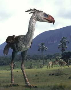 http://oiseauxdeproie.webh.ovh/Phorusrhacos.jpg